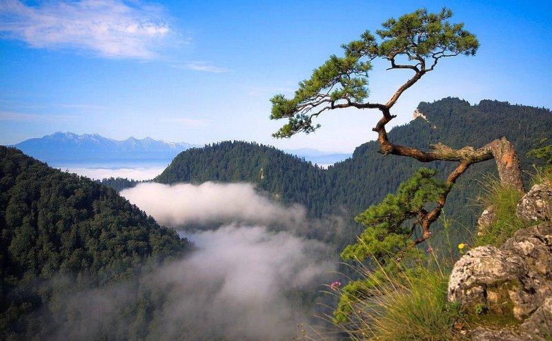 Górska przyroda